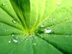 Postal: La hoja de una planta con gotas de agua
