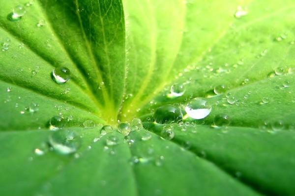 La hoja de una planta con gotas de agua