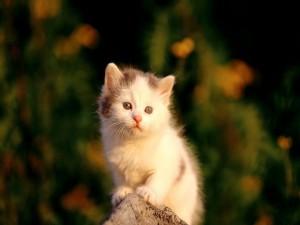Postal: Gatito en una piedra