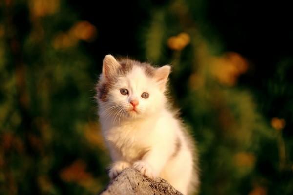 Gatito en una piedra
