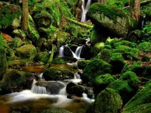 Agua entre rocas verdes