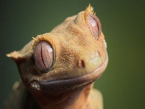 Postal: Cara divertida de un lagarto