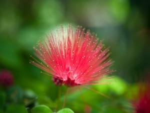 Postal: Extraña flor rosa