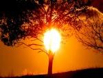 El círculo del sol sobre un árbol