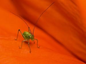 Precioso insecto con largas antenas