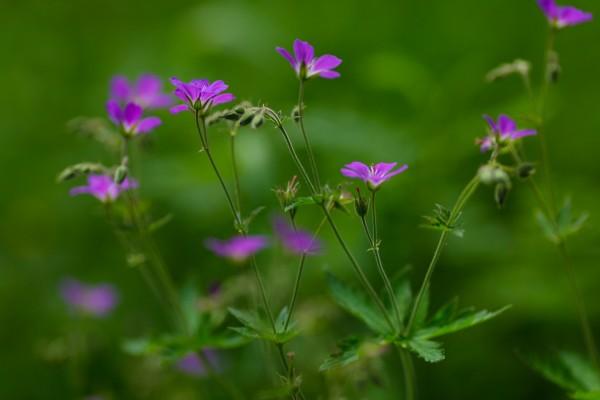 Florecillas silvestres