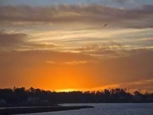 Un pájaro en el cielo anaranjado