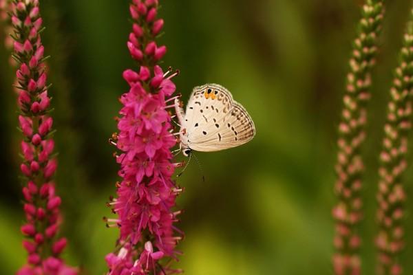 Mariposa en una flor rosa