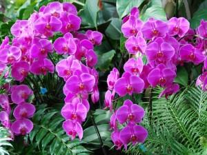 Orquídeas color púrpura
