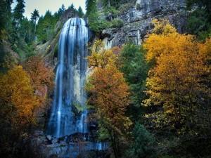 Postal: Cascada y árboles con los colores del otoño