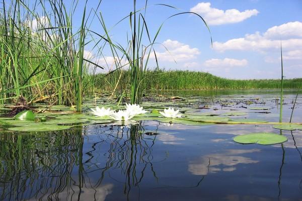Gran vegetación en el río Sava