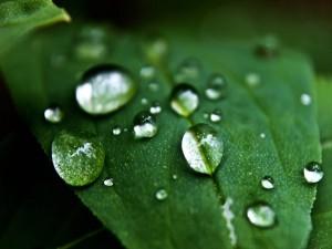 Postal: Gotas de agua en una hoja verde