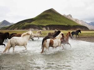 Caballos cruzando el río