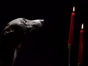 Perro mirando las velas