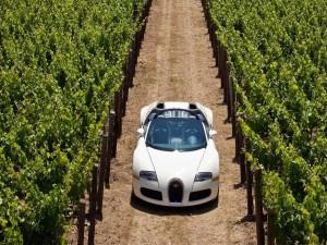 Postal: Bugatti Veyron en un viñedo