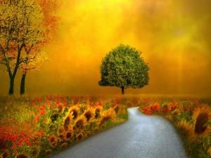 Camino entre naturaleza