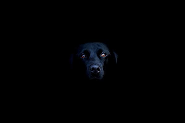 Un perro negro en la oscuridad