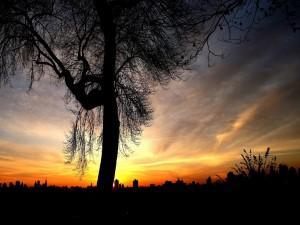 Árbol en la noche, con la ciudad al fondo