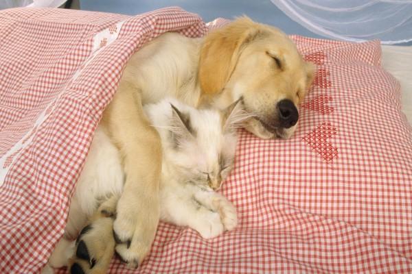 Perro durmiendo con un gato