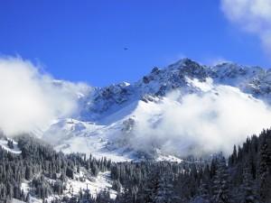 Pinos, nieve y montañas