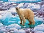 Oso polar en los glaciares de Noruega