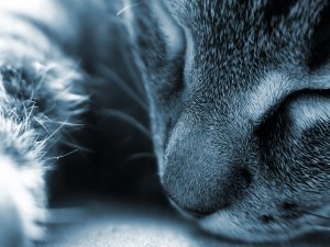 Minino durmiendo