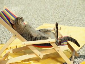 Un gato tumbado al sol