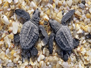 Dos pequeñas tortugas