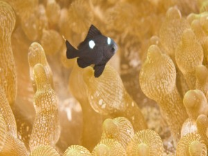Un pequeño pez negro