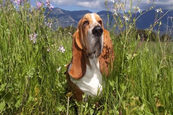 Perro entre flores silvestres