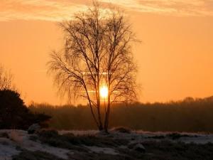 Postal: Vista del sol entre las ramas de un árbol