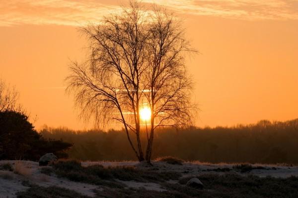 Vista del sol entre las ramas de un árbol