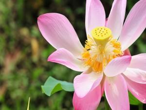 Postal: Curioso interior de una bonita flor