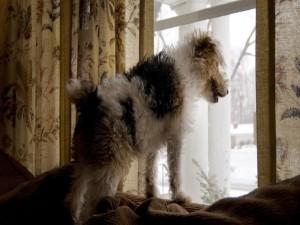 Perro mirando por la ventana