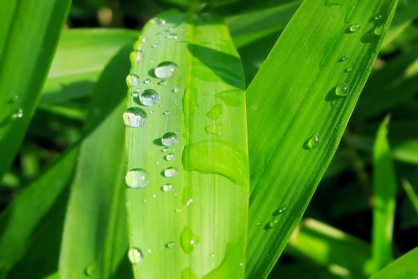 Plantas húmedas