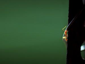 Hormiga escalando