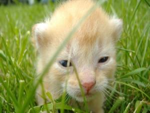 Gatito recién nacido