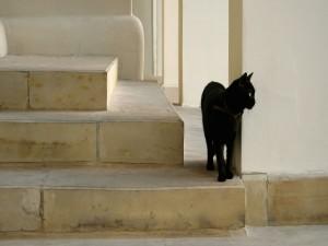 Postal: Gato negro en la escalera