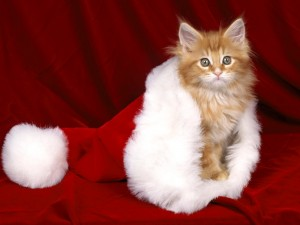 Postal: Gatito en un gorro de Santa Claus