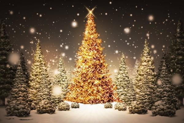 Nieva sobre los árboles de Navidad