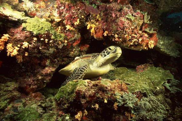Una tortuga entre rocas marinas