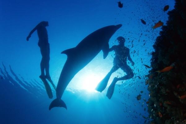 Nadando con un delfín