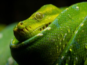 Postal: Serpiente verde lima