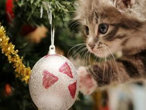 Postal: Gatito mirando las esferas del árbol de Navidad