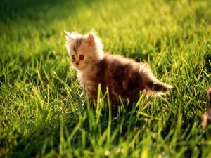 Gatito en la hierba
