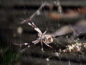 Una gran araña en su telaraña