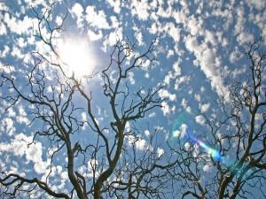 Árboles desnudos bajo un cielo con sol y nubes