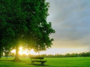 Banco junto a un gran árbol