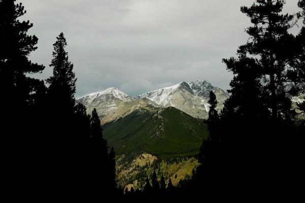 Montañas y pinos