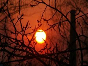 Postal: El sol entre las ramas